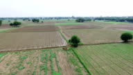 Agriculture land video