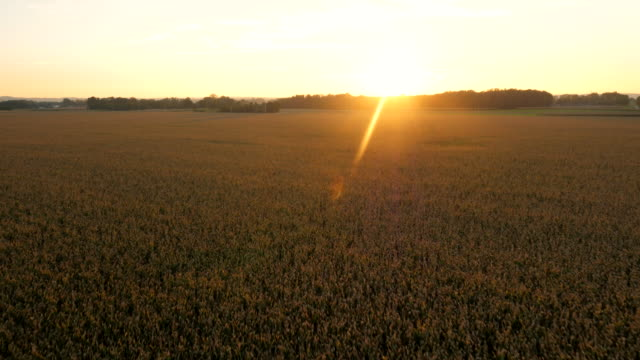 AERIAL Agriculture Landscape At Sunset video