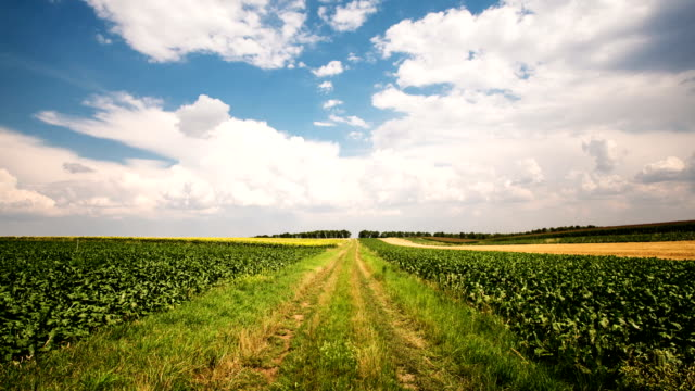 Agriculture Landscape - Time Lapse video