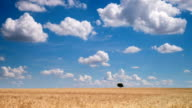 Agriculture Landscape with cumulus clouds - time lapse video