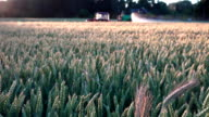 agriculture machine spaying cereal wheat field in summer video