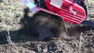 Agriculture. Ploughing the soil video