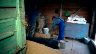 Agriculture summer end works. Men sifting grain with retro machine in barn video