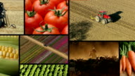 Agriculture, video montage video