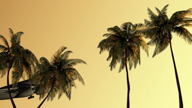 Air travel on the sea, palm trees, beach, relaxation video