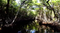 Airboat Ride through mangrove forest video