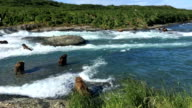 Alaska Brown Bear Fishing for Salmon at McNeil River Falls video