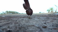 Alatus seed is flying video