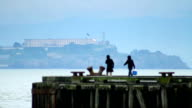Alcatraz Island Tourists video