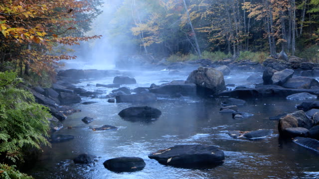Algonquin river rapids in autumn video