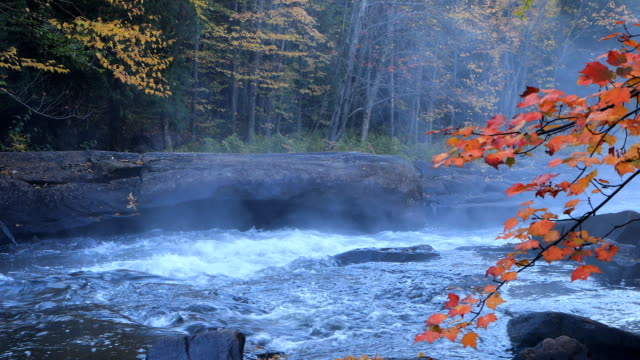 Algonquin river rapids in beautiful fall colors video