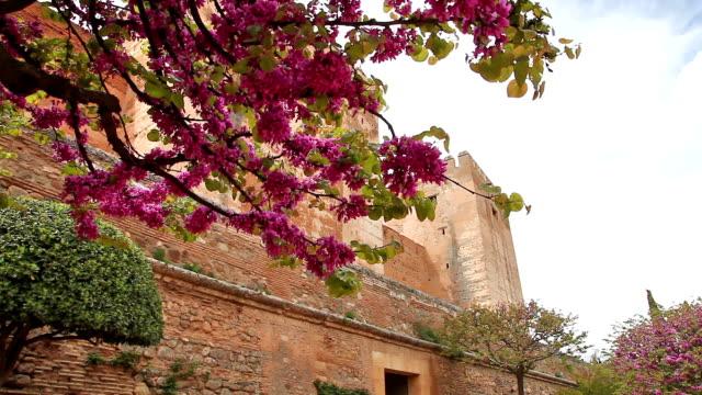 Alhambra fortress walls video