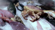 alive crab in a freezer video