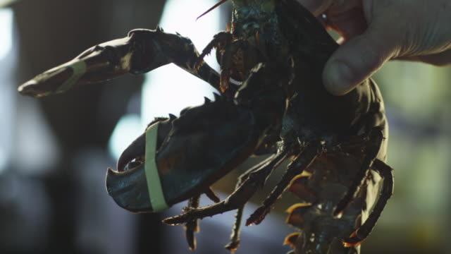 Alive Lobster in Luxury Restaurant video