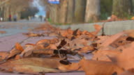 Alley autumn park is dotted with maple leaves video