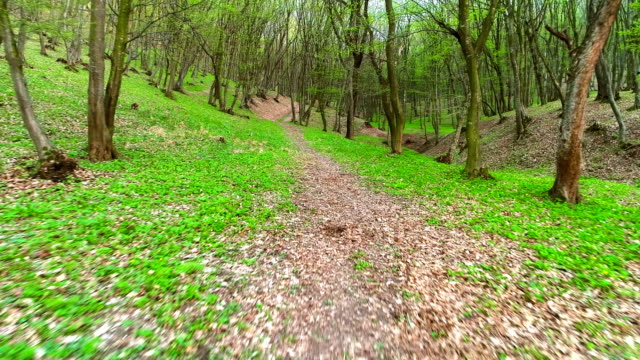 Along the Footpath in the Forest video