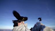 Alpine chough takes piece of bread out of snowboarders mouth video