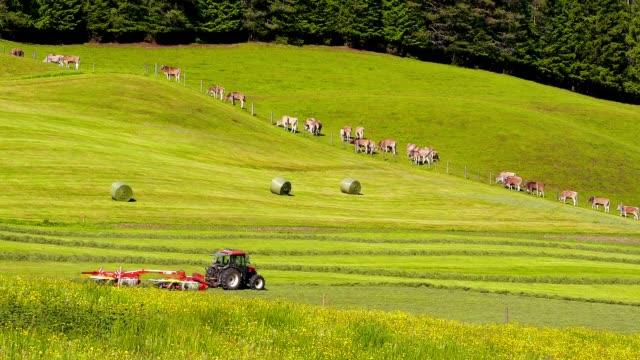 Alpine farming. video