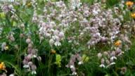 Alpine flower video