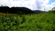 alpine meadow, Ili River Valley video