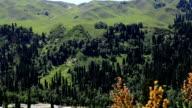 alpine meadow, mountains , Ili River Valley video