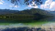 Amazing Bohinj Lake in morning. Duck is swimming in clear water with fish. Gorgeous landscape of Julian Alps. Triglav National Park, Slovenia, Europe. video