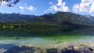 Amazing Bohinj Lake in morning. Duck swims and flies in clear water with fish. Gorgeous landscape of Julian Alps. Triglav National Park, Slovenia, Europe. video
