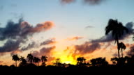 Amazing cloudy sunset time lapse with silhouettes of palm trees in the background video