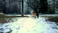 Amazing golden retriever dog playing with a man outdoors video