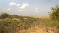 Amazing lush acacia woodland and endless savannah grassland on Serengeti plains video