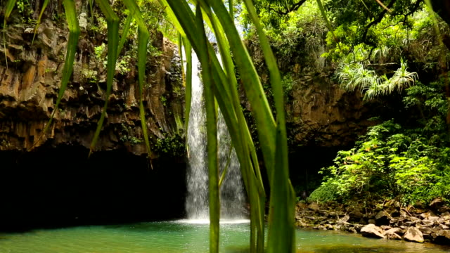 Amazing Tropical Waterfall. Nature Scenic Landscape. video