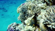 Amazing underwater world of the Red Sea, exotic fish underwater video video