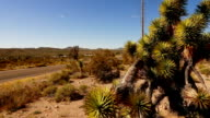 Amazing vegetation like joshua trees in the canyonlands video