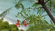 Amazing view of St Barth with tropical pink flowers video