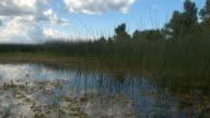 CLOSE UP: Amazing wild aquatic ecosystem life in natural overgrown swamp wetland video