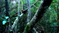 Amazing wild nature in the Everglades in Florida - jungle like video
