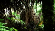 Amazon Rainforest video