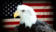 American Bald Eagle video