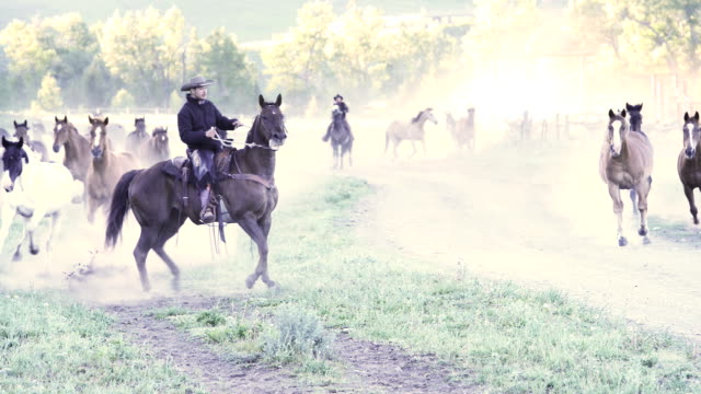 American Cowboy Rounding Up Horses on Montana Ranch video