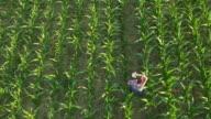 AERIAL American farmer checking sprinklers in the field video