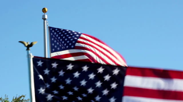 American Flags waiving on Veterans Day video