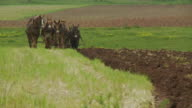 Amish Boy And Horses Plowing Field video