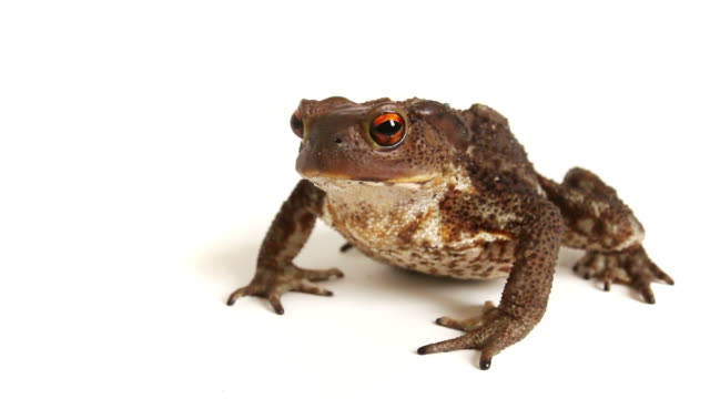 Amphibian Zoom Out Video video