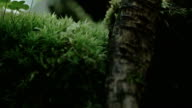 An arachnid crawling on the leaves 4K FS700 Odyssey 7Q video