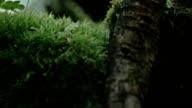 An arachnid crawling on the leaves  FS700 Odyssey 7Q video