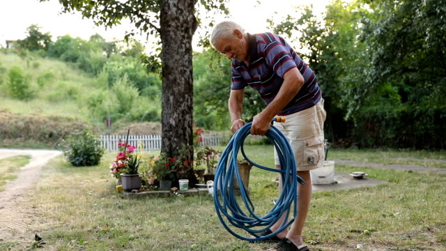 An elderly man is collecting a hose in the yard video