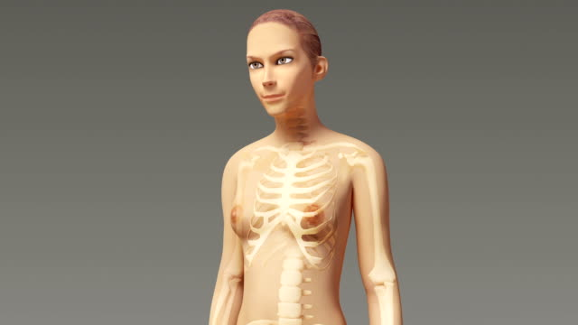 Anatomy Of A Young Female Body With Visible Skeleton video