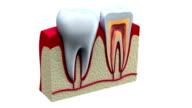 Anatomy of healthy teeth in details video