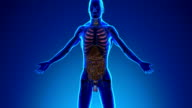 Anatomy of Human Digestive System - Medical X-Ray Scan video