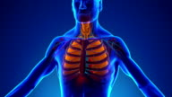 Anatomy of Human Respiratory System - Medical X-Ray Scan video